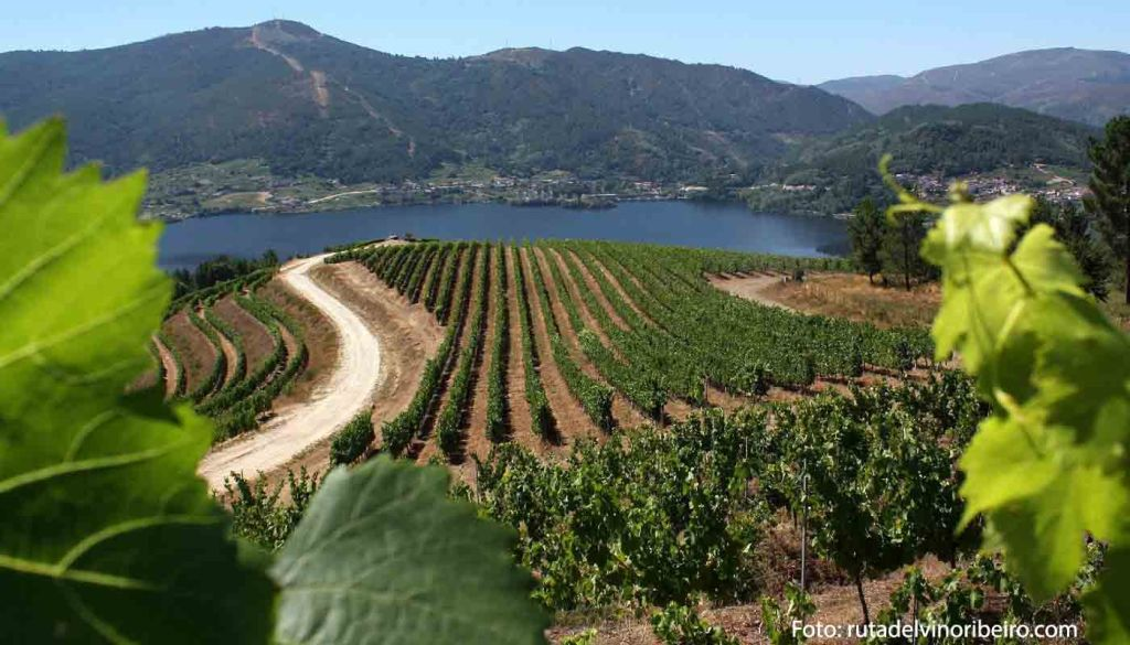 Ruta del vino Ribeiro - vinos de España - enoturismo en Galicia