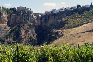 Ruta del vino del Málaga - vinos de España - enoturismo en Andalucía