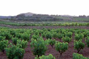 La ruta del vino de la Terra Alta - vinos de España - enoturismo en Cataluña
