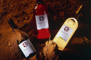 DOP Tierra de León: tipos de uvas, vinos, bodegas y zona geográfica - vinos de España