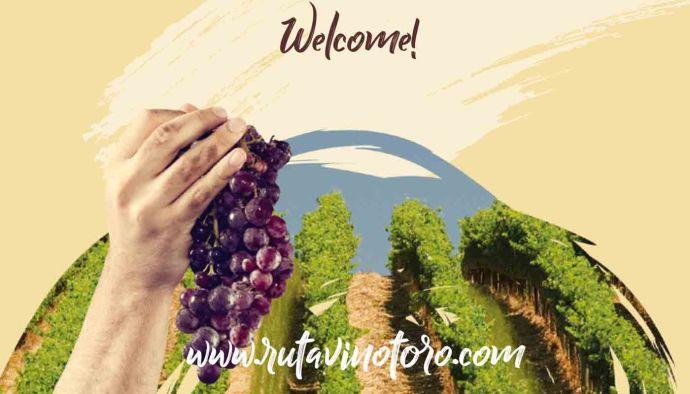 Ruta del vino de Toro, la huella del románico entre viñedos - enoturismo