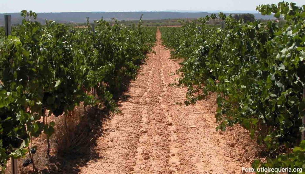 Ruta del vino Utiel Requena - vinos de España - enoturismo en La Comunidad de Valencia