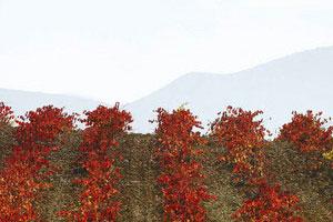 Ruta del vino de Utiel Requena - vinos de España - enoturismo en la Comunidad Valenciana