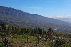 Ruta del vino de Tenerife: Valle de Güímar - vinos de España - enoturismo en las Islas Canarias
