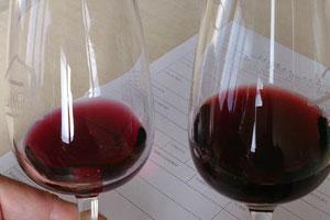 DOP Valle de Orotava: tipos de uvas, vinos, bodegas y zona geográfica - vinos de España