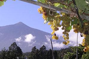 Ruta del vino de Tenerife: Ycoden Daute Isora - vinos de España - enoturismo en las Islas Canarias