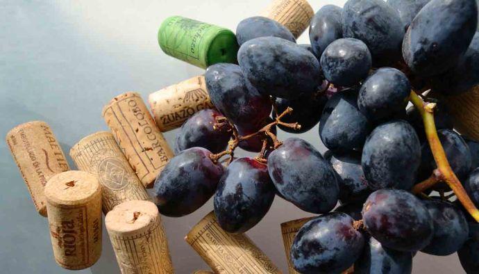 Cómo funcionan las bodegas de vinos
