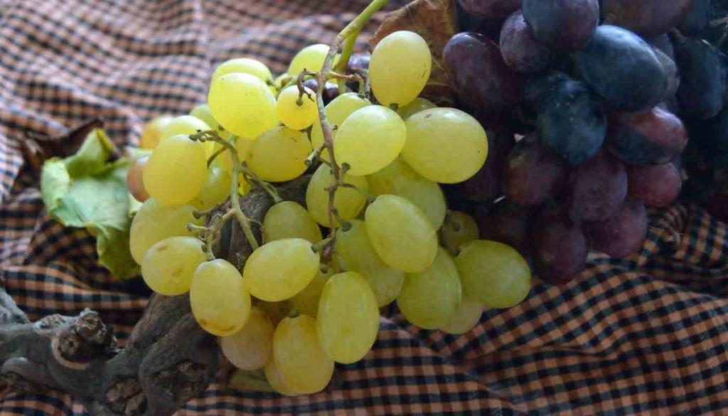 El papel del enólogo en una bodega de vinos