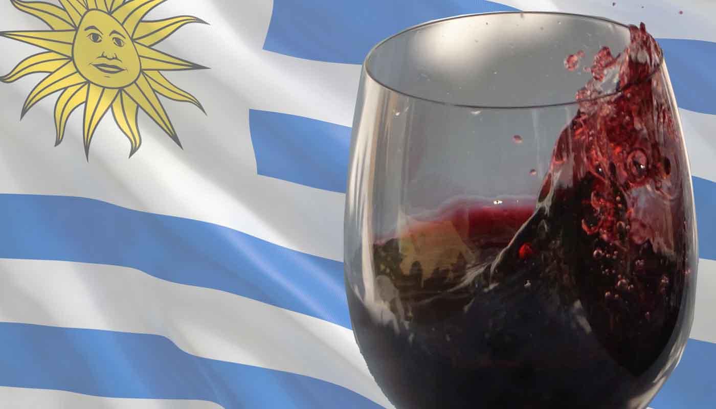 Vinos de Uruguay: características, uvas y zonas geograficas