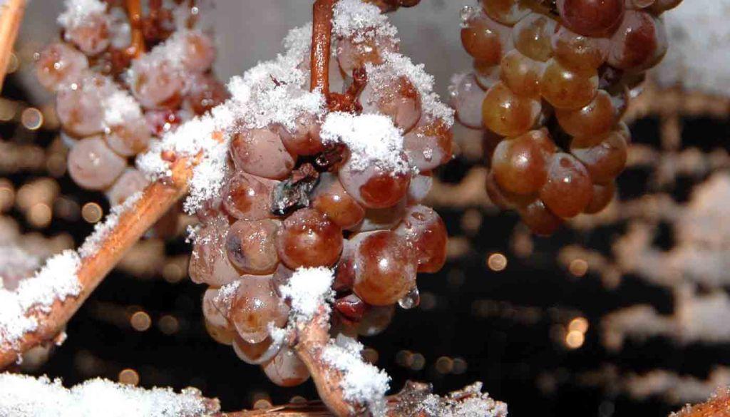 ¿Qué son los vinos de hielo y cómo se elaboran? - tipos de vinos