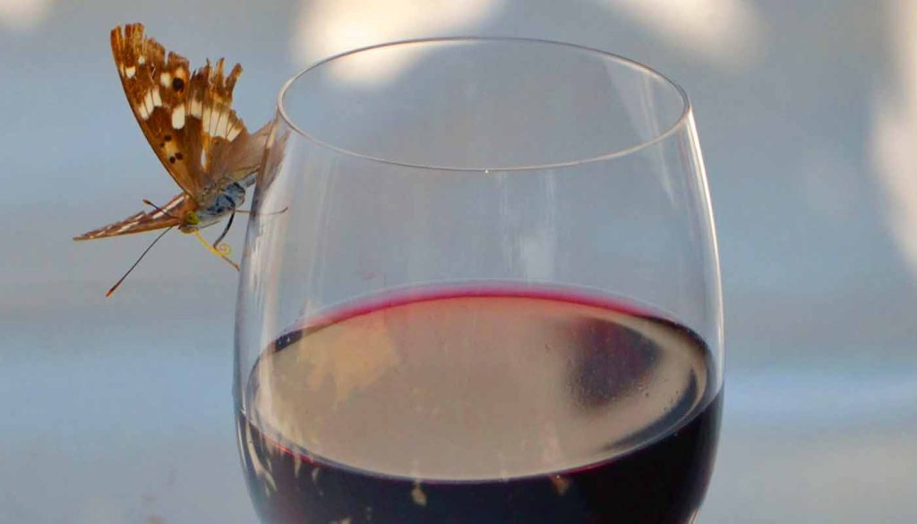 Diferencias entre vinos ecológicos y vinos naturales - tipos de vinos