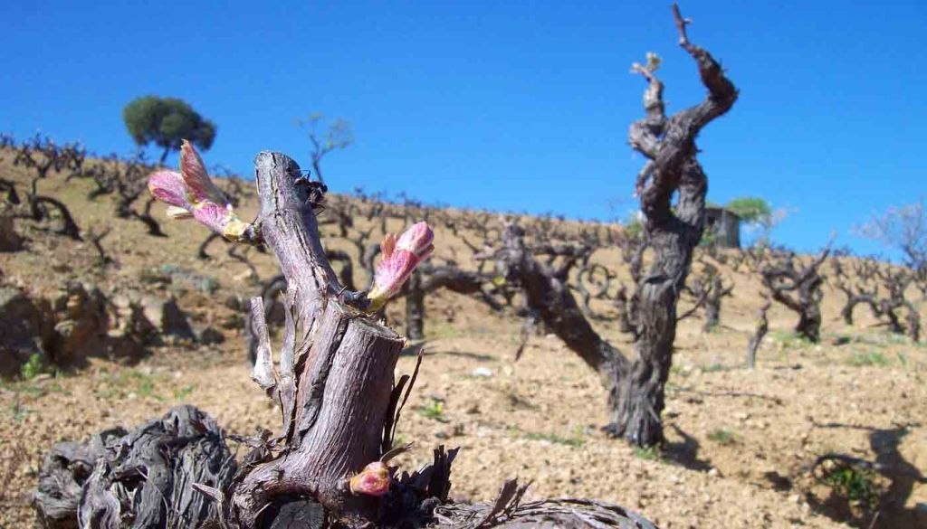 Siete curiosidades sobre el mundo del vino