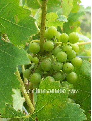 el origen del cultivo de la vid para la elaboración de vinos