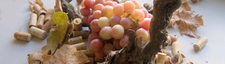 zona de vinos - magazine de vinos y enoturismo